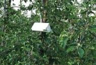 FOT. 4a. Pułapka feromonowa w sadzie