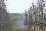 FOT. 2b. Wczesnowiosenne opryski jabłoni nawozami zawierającym i cynk i bor