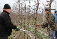 FOT. 4. Wiesław Mazur podczas omawiania zasad cięcia młodych jabłoni