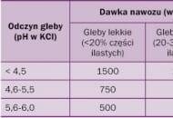 Tabela 1. Maksymalne jednorazowe dawki nawozów wapniowych lub wapniowo-magnezowych stosowane w sadach (za T. Kleiberem)
