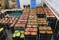 Fot. 1. Jabłka na eksport przygotowane do załadunku