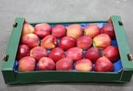 Fot. 3. Duże owoce 'Glostera' są w Rosji produktem luksusowym