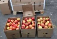 Fot. 6. 'Idared' w tzw. teleskopach to wciąż najpopularniejsze jabłko wysyłane na Wschód