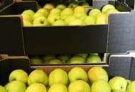 Fot. 7. Rosjanie preferują jabłka 'Golden Deliciousa' o seledynowej skórce