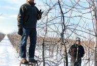 FOT. 2. Pokaz prowadzony przez Petera van Arkela – cięcie rozpoczynane jest od górnej partii drzewa