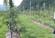 FOT. 4. Doświadczenie polegające na sprawdzeniu, która z dostępnych podkładek dla jabłoni jest najbardziej odporna na chorobę replantacyjną