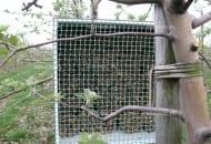 FOT. 6. Wyloty rurek trzcinowych powinny być zabezpieczone siatką o małych oczkach przed ptakami i gryzoniami