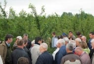 Fot. 4. Dobrze chronione sady wiśniowe będą obficie owocować