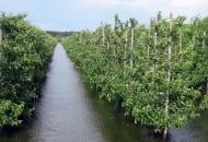 Fot. 1. Zalany sad w okolicach Sandomierza