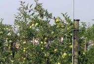 Fot. 2. W wielu krajach, np. Włoszech do schładzania drzew podczas dni z wysoką temperaturą używa się zraszaczy ponadkoronowych