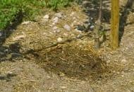 Fot. 2. Nawadnianie sadu wydaje się działaniem w zupełności zabezpieczającym przed skutkami niedostatku wody