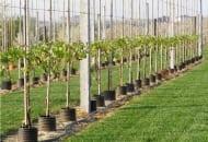 FOT. 5. Winnica na terenie Wyżyny Sandomierskiej wiosną