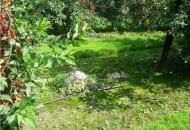 FOT. 8b. Przykłady prawidłowego postępowania sadownika w ograniczaniu źródła infekcji patogenu powodującego srebrzystość liści: część pnia po ścięciu przysypano glebą