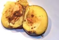 FOT. 9. Śliwka uszkodzona przez owocówkę śliwkóweczkę