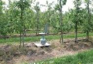 FOT. 5. Spore trap wyłapujący zarodniki workowe w sadzie produkcyjnym