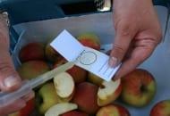 Fot. 3. Kroplę soku należy nanieść na dostarczoną w teście kartę