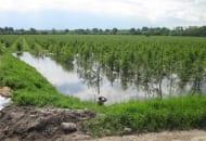 Fot. 1. Zalany wodą sad w rejonie Sandomierza