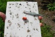Fot. 1. Podłoga lepowa z feromonem i pęseta do usuwania odliczonych motyli