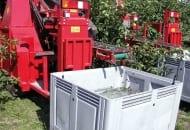 FOT. 4. Zbiór wiśni do pojemników ze schłodzoną wodą