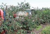 FOT. 5. Zespół otrząsający do zbioru owoców konsumpcyjnych