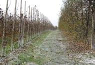 FOT. 7. Nawożenie doglebowe jesienią pozwala na zapewnienie drzewom składników pokarmowych na następny sezon