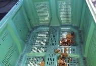 FOT. 2. Skrzyniopaleta ztworzywa sztucznego przed włożeniem jabłek wymaga umycia,…