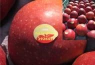 Fot. 2. Każde jabłko przeznaczone do sieci TESCO ma indywidualną etykietę z nazwą odmiany