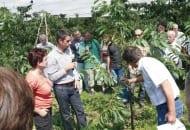 Fot. 12. Toon Vanrykel tłumaczył zasadę prowadzenia drzew czereśniowych w młodym sadzie