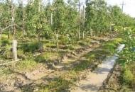 Fot. 3. Drzewa zamierające z powodu nadmiaru wody
