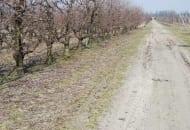 6-2011-przydatnosc-sadownicza-roznych-podkladek-wegetatywnych-fot.1.jpg