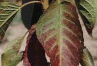 6-2011-przydatnosc-sadownicza-roznych-podkladek-wegetatywnych-fot.4.jpg