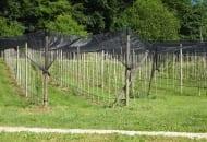 FOT. 4. Kwatera młodych jabłoni – wiele drzew już wypadło, inne są wyraźnie słabsze od pozostałych – skutki żerowania nornic