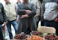FOT. 1. Dr Elżbieta Rozpara z owocami czereśni z kolekcji w Dąbrowicach
