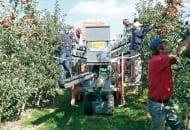 FOT. 1. Pluk-O-Trak podczas zbioru jabłek
