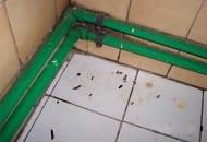 Fot. 1. Odchody szczura na posadzce pomieszczenia