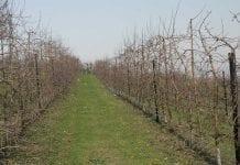 Wybieramy nawozy azotowe do wiosennego nawożenia sadów