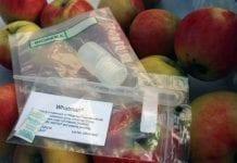 Nowy test do dokładnego wyznaczania terminu zbioru owoców