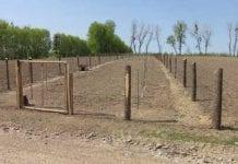 Sytuacja sadownictwa na Ukrainie
