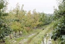 Nawożenie sadów po trudnych sezonach