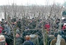 Cięcie drzew ziarnkowych zimą
