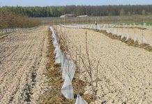 Zmęczenie gleby i możliwości niwelowania skutków tego zjawiska
