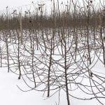 Zabiegi przed i po sadzeniu drzewek