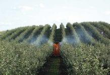 Jak właściwie wykonywać zabiegi ochrony roślin?