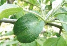 Odporność agrofagów – zagrożenia i sposoby minimalizowania