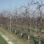 Nawożenie sadów fosforem i potasem – jesienią czy wiosną?