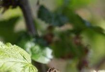 Ochrona sadów – stare i nowe problemy