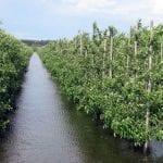 Jak ratować sad zalany wodą?