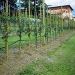 Stosowanie nawozów w sadownictwie. Prawdy, mity i przyzwyczajenia