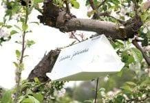 Owocówki – biologia, zagrożenie i zwalczanie