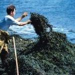 Na bazie morskich alg